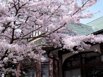 桜と建物.JPG