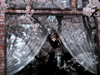 窓と桜.JPG
